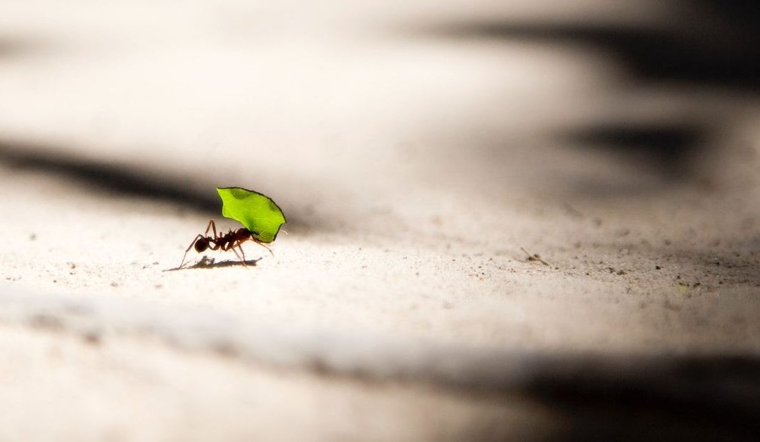 Learning From the Ant: A Money Lesson